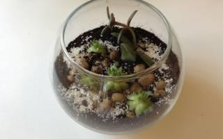 Флорариум своими руками как сделать мини сад в стекле