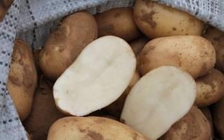 Сорт картофеля удача ранний устойчивый урожайный