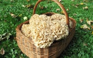 Какие грибы растут в башкирии фото с названиями