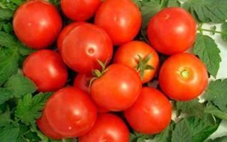 Как вырастить томат ямал правила посадки и ухода