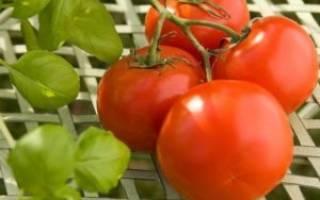 Необычный сорт помидоров палка